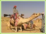 Camel ride on the Sand Dunes