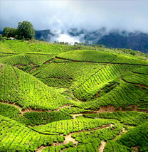 Kerala Hill Station