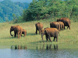 Periyar wildlife sanctuaries