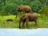 Thekkady: Wildlife Treasure of Kerala